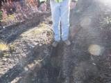 Trail #220 Strawberry Mountain DSCF1005.jpg