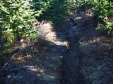 Trail #220 Strawberry Mountain DSCF1008.jpg