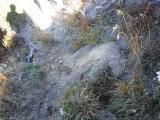 Green River Trail #213 DSCF1016.jpg