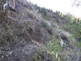 Green River Trail #213 DSCF1017.jpg