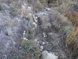 Green River Trail #213 DSCF1018.jpg