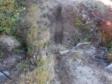 Green River Trail #213 DSCF1020.jpg