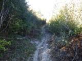 Green River Trail #213 DSCF1021.jpg