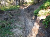 Green River Trail #213 DSCF1033.jpg