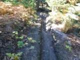 Green River Trail #213 DSCF1035.jpg