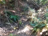 Green River Trail #213 DSCF1036.jpg