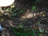 Green River Trail #213 DSCF1037.jpg