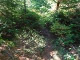 Green River Trail #213 DSCF1038.jpg