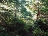 Green River Trail #213 DSCF1039.jpg