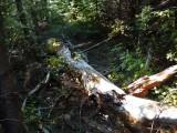 Green River Trail #213 DSCF1040.jpg