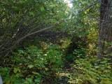 Green River Trail #213 DSCF1041.jpg