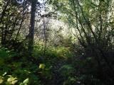 Green River Trail #213 DSCF1042.jpg