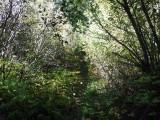 Green River Trail #213 DSCF1043.jpg