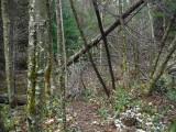 Green River Trail #213 DSCF1045.jpg