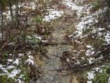 Green River Trail #213 DSCF1047.jpg