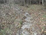 Green River Trail #213 DSCF1049.jpg
