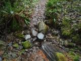 Green River Trail #213 DSCF1050.jpg