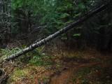 Green River Trail #213 DSCF1051.jpg