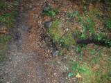 Green River Trail #213 DSCF1052.jpg