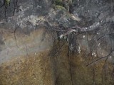 Green River Trail #213 DSCF1053.jpg