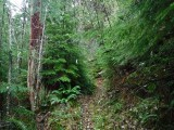 Green River Trail #213 DSCF1055.jpg