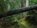 Green River Trail #213 DSCF1056.jpg