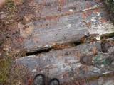 Green River Trail #213 DSCF1058.jpg