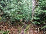 Green River Trail #213 DSCF1060.jpg