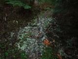 Green River Trail #213 DSCF1062.jpg