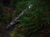 Green River Trail #213 DSCF1063.jpg