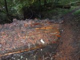 Green River Trail #213 DSCF1064.jpg