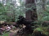Green River Trail #213 DSCF1065.jpg