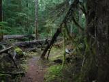 Green River Trail #213 DSCF1066.jpg
