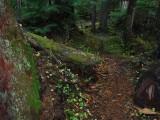 Green River Trail #213 DSCF1067.jpg