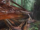 Green River Trail #213 DSCF1068.jpg
