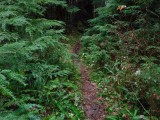 Green River Trail #213 DSCF1069.jpg