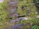 Green River Trail #213 DSCF1070.jpg