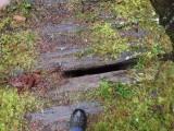 Green River Trail #213 DSCF1071.jpg