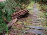 Green River Trail #213 DSCF1072.jpg