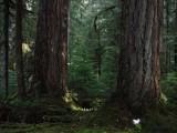 Green River Trail #213 DSCF1073.jpg