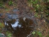 Green River Trail #213 DSCF1074.jpg