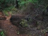 Green River Trail #213 DSCF1075.jpg