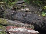 Green River Trail #213 DSCF1078.jpg