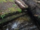 Green River Trail #213 DSCF1079.jpg