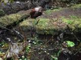 Green River Trail #213 DSCF1080.jpg