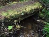 Green River Trail #213 DSCF1081.jpg