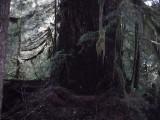 Green River Trail #213 DSCF1086.jpg