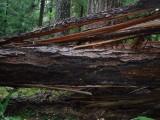 Green River Trail #213 DSCF1087.jpg