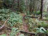 Green River Trail #213 DSCF1089.jpg
