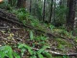 Green River Trail #213 DSCF1090.jpg